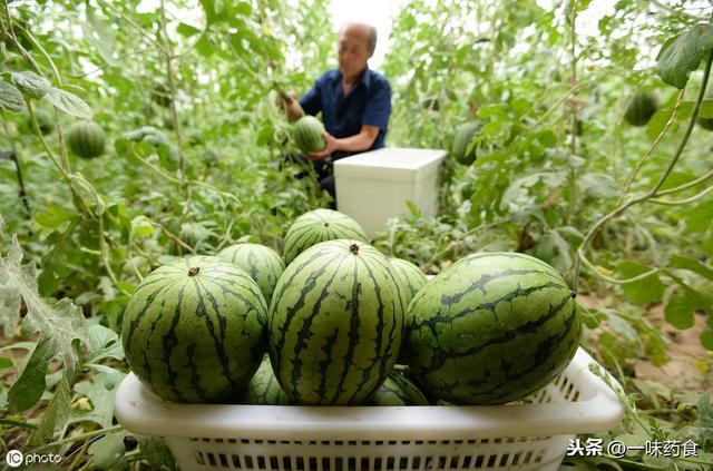 吃瓜群眾何時開始吃瓜?關于種瓜吃瓜的種種,賣瓜群眾告訴你
