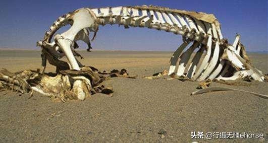昆侖山死亡谷被稱為生命禁地,為何會重兵把守,暗藏了怎樣的秘密